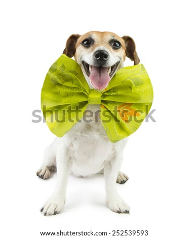 dog with a funny big bow on her neck - stock photo
