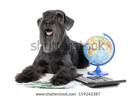 dog with a globe, money and calculator - stock photo