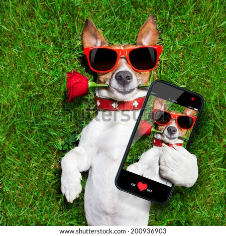 dog with a red rose in his mouth taking a selfie - stock photo