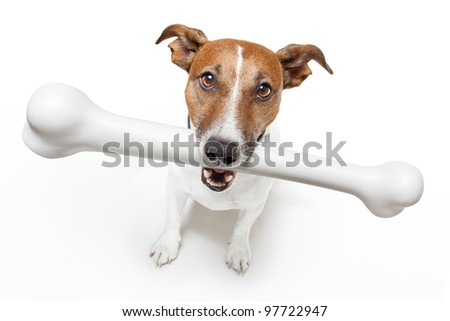 dog with a white bone - stock photo