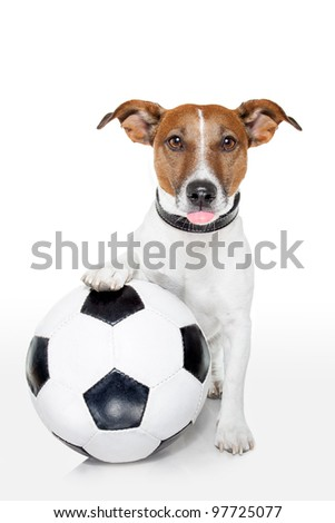 dog with a white soccer ball - stock photo