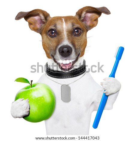 dog with big white teeth with an apple and a toothbrush - stock photo