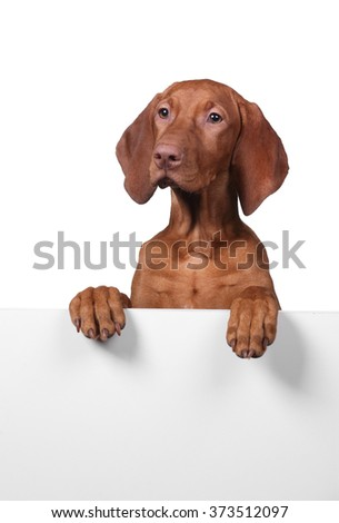 dog with blank banner isolated on white background - stock photo