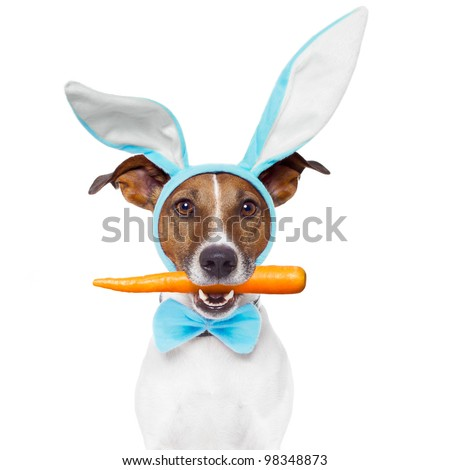 dog with bunny ears and a carrot - stock photo