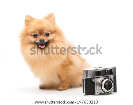 dog with camera - stock photo
