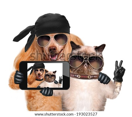 dog with cat taking a selfie together with a smartphone  - stock photo
