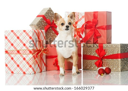 Dog with christmas gifts - stock photo