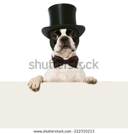 Dog with cylinder hat - stock photo