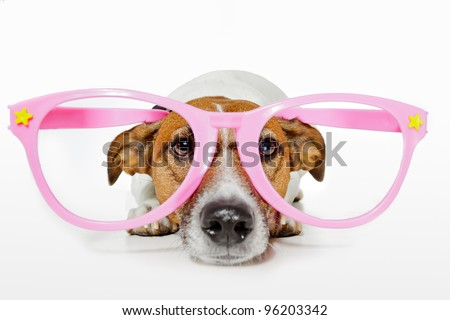 dog with funny glasses - stock photo