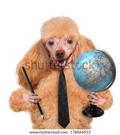 dog with  globe  - stock photo