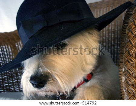 Dog with hat on - stock photo