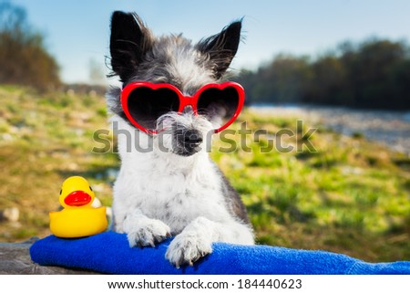 dog with heart sunglasses on a summer vacation day - stock photo