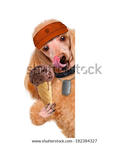 Dog with ice cream - stock photo