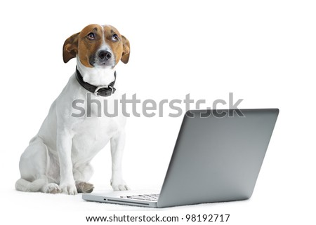 dog with laptop and thinking - stock photo