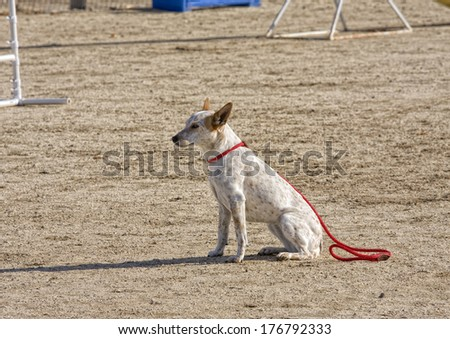 Dog with leash on sitting in sand being trained - stock photo
