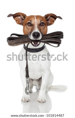 dog with leather leash - stock photo