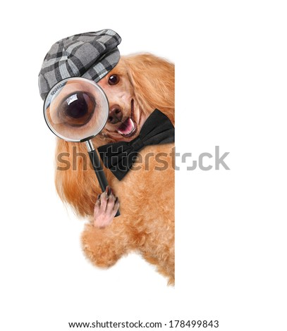 dog with magnifying glass and searching - stock photo