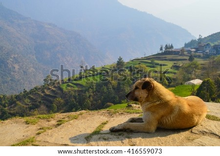Dog with mountain terraces in the background. Himalayas, Nepal - stock photo