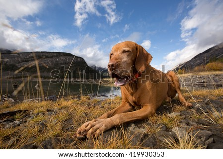 dog with open mouth laying on ground - stock photo
