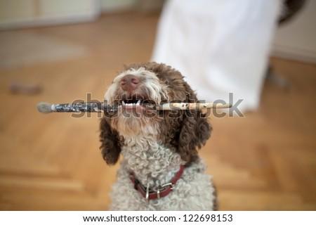 dog with paint brush - stock photo