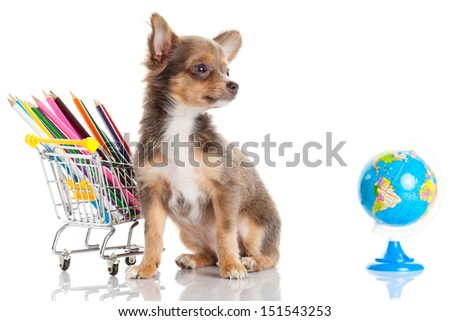 dog with pencil and globe - stock photo