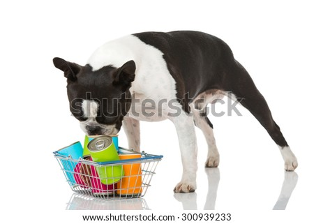 Dog with pet food isolated on white - stock photo