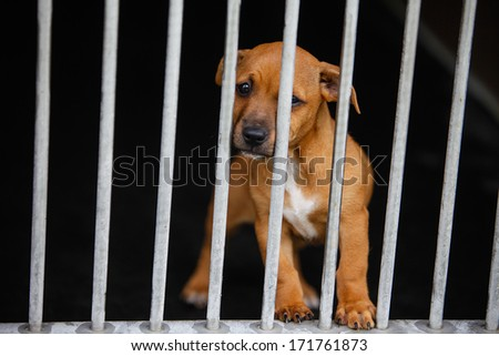 Dog with sad eyes in a cage behind bars - stock photo