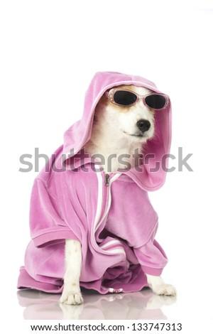 Dog with shirt - stock photo