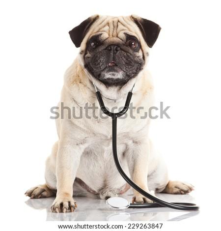 dog with stethoscope. - stock photo