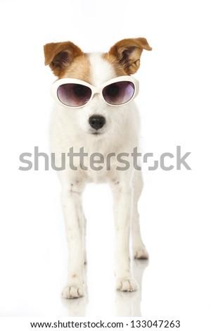 Dog with sunglasses - stock photo