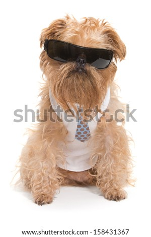Dog with sunglasses and a tie, isolated on white background - stock photo