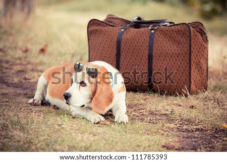 Dog with Sunglasses and Old Fashioned Suitcase - stock photo