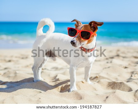 dog with sunglasses at the beach on summer vacation holidays - stock photo