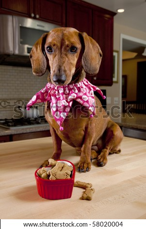 Dog with treats in heart shaped bowl sitting on kitchen table - stock photo
