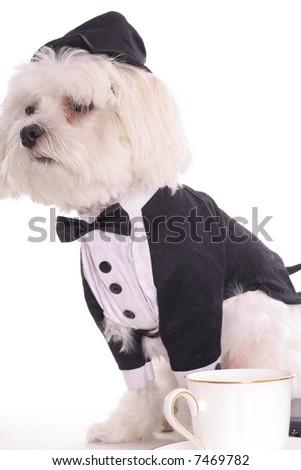 doggy break - stock photo