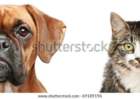 Dogs and cats. half of muzzle close up portrait on a white background - stock photo