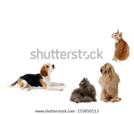 Dogs and cats together, isolated on white background, sit and laying down and looking up - stock photo
