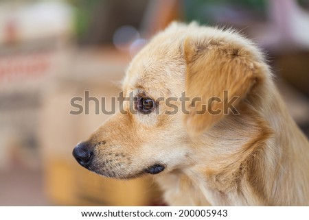 Dogs are sad - stock photo
