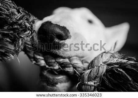 Dogs head - stock photo
