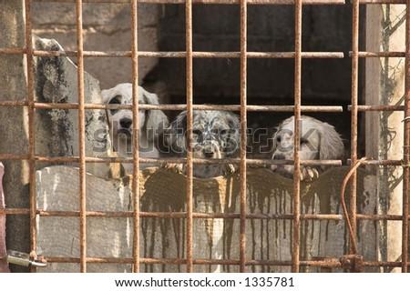 dogs in captivity - stock photo