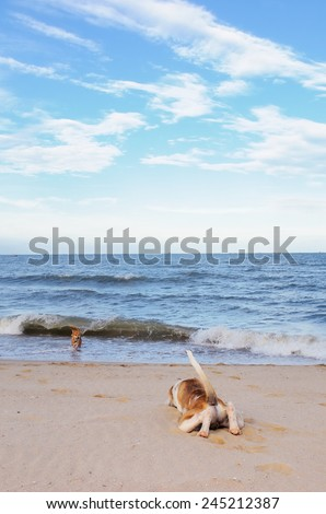 Dogs on the beach with blue sky / Dogs on the beach  - stock photo