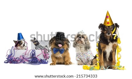 Dogs partying - stock photo