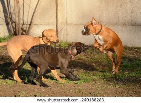 Dogs playing in the park - stock photo