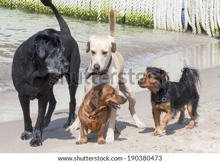 dogs playing  in water at the beach - stock photo