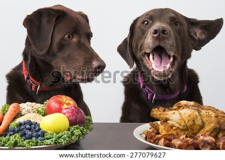 Dogs with choice of food diet - stock photo