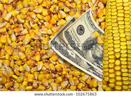 Dollar bills and corn beans background - stock photo