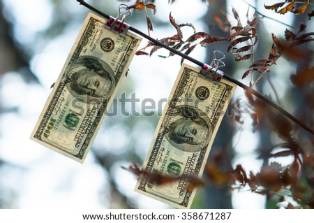 Dollars growing on a tree branch - stock photo