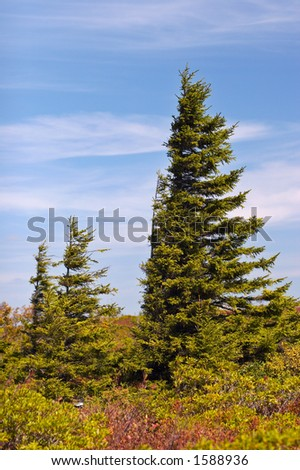 Dolly Sods, Monongahela National Forest, West Virginia, USA - stock photo