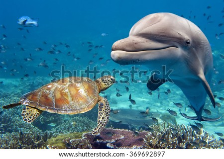 dolphin and turtle underwater on reef background looking at you - stock photo