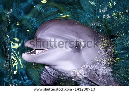 Dolphin Close-Up - stock photo